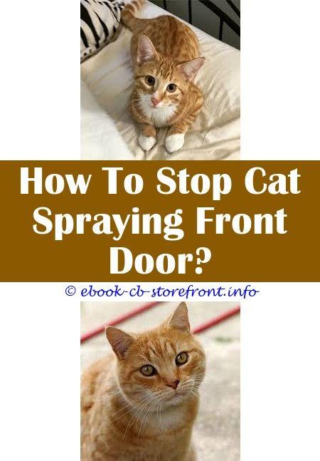19 Divine Cat Spray White Vinegar Toxoplasmosis Bebe