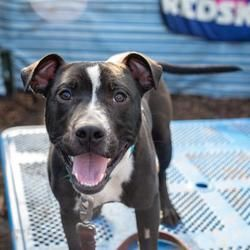 Available Pets At Humane Rescue Alliance New York Ave Adoption