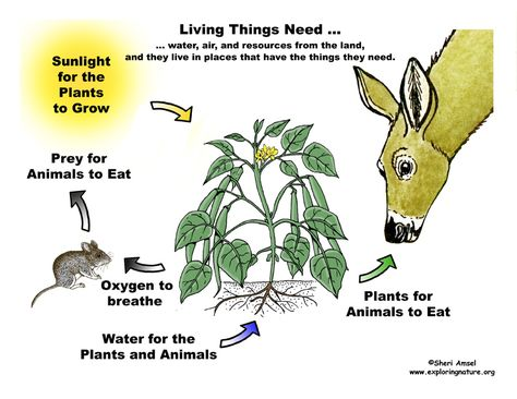 What Living Things Need Plants Molecules Classroom Strategies
