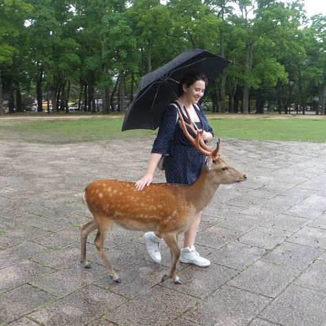 These are the most polite deer ever!