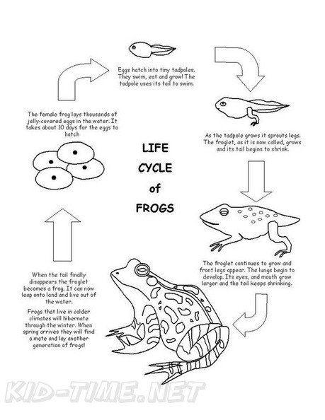 Frog Life Cycle Coloring Page Frog Life Cycle Coloring Book Page Easy Coloring Pages Preschool Coloring Pages Free Easter Coloring Pages