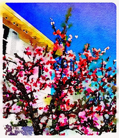Cherry Blossoms Digital Watercolor - Canvas Wall Art ( 16 x 20 ) – Rodney Washington | Art Photography - $104 - http://rodneywashingtonartphotography.com/