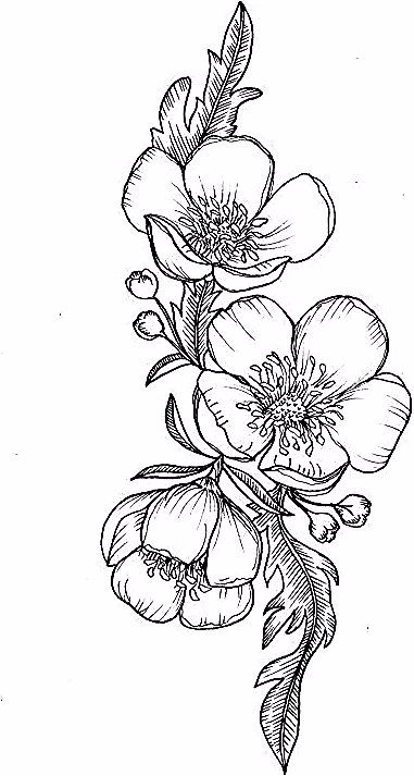 Buttercup Flower Tattoo 2 570 X 836 Uncategorized In 2020 Buttercup Flower Flower Tattoo Tattoos