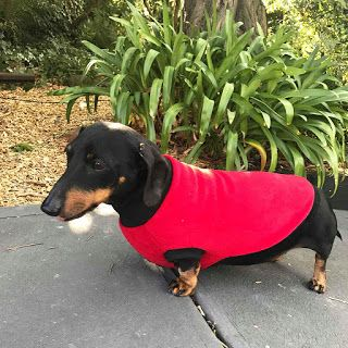 Top 16 Winter Warmers For Your Dogs Australian Dog Lover Dogs