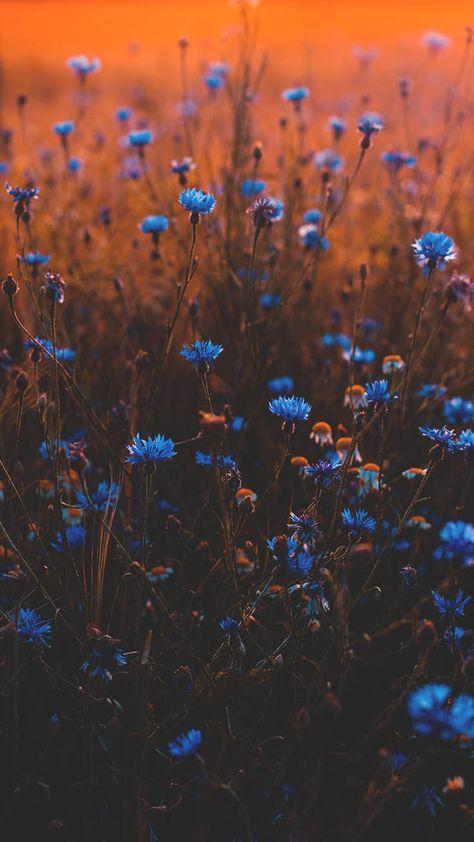 Tilt Shift Lens Photo of Blue Flowers · Free Stock Photo Nature Aesthetic, Flower Aesthetic, Blue Aesthetic, Aesthetic Vintage, Iphone Background Wallpaper, Tumblr Wallpaper, Nature Wallpaper, Flowers Background Iphone, Fall Backgrounds Iphone