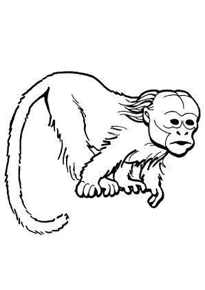 Ausmalbild Totenkopfaffchen Ausmalen Affen Ausmalbilder Tiere