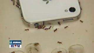 أضرار موجات الهواتف المحمولة على النمل News 6