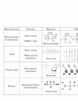50 Organic Molecules Worksheet Answer Key In 2020 With Images