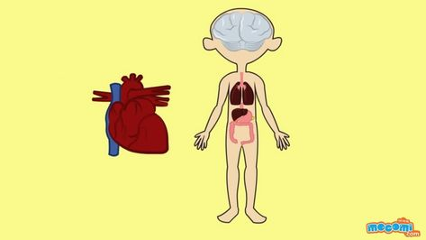 The Circulatory System - Human Body Parts | Science for Kids | Educational Videos by Mocomi