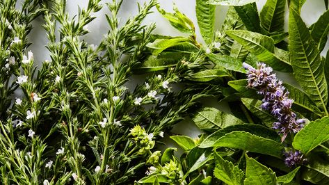 13 Fresh Herbs and How to Use Them | Epicurious