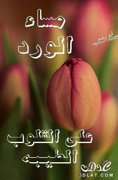 مسجات مسائية بالصور 2019 مساء الخير 3dlat Net 24 16 9653 Good Morning Images Flowers Good Evening Greetings Evening Pictures