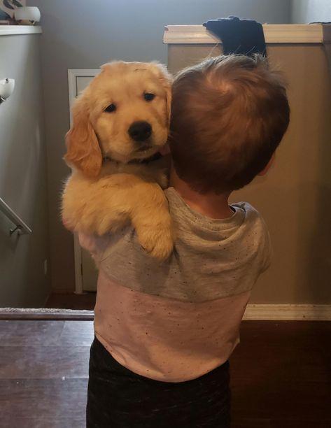 ✔ Cute Puppies Fluffy Golden Retrievers #cutegirls #cuteboys #cutepuppies