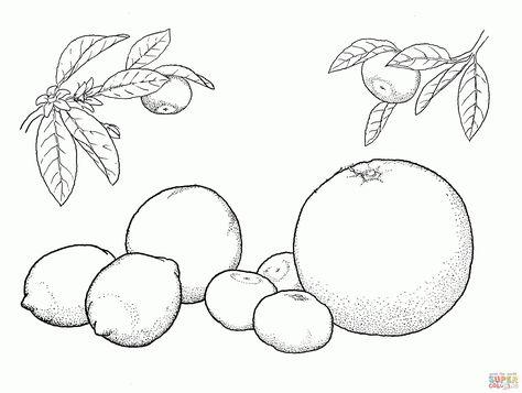 Disegno Di Arance E Limoni Da Colorare Disegni Da Colorare E
