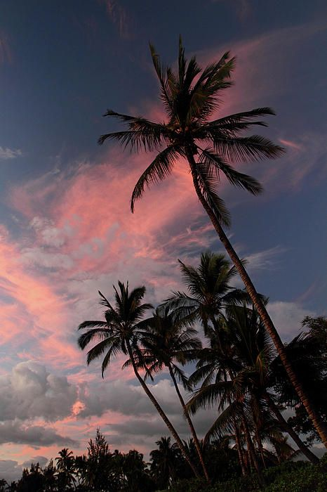 Kihei Tropical Sunset Art Print by Pierre Leclerc Photography. All prints are professionally printed, packaged, and shipped within 3 - 4 business days. Choose from multiple sizes and hundreds of frame and mat options.
