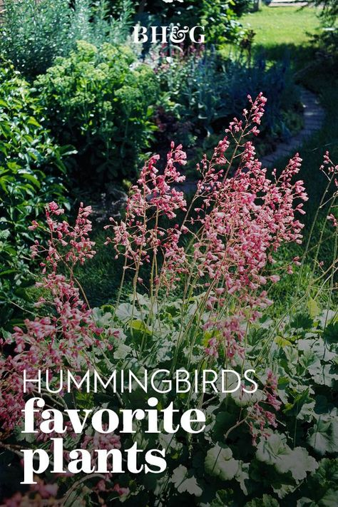 Grow as many of these hummingbird favorites as you can to attract the beautiful feathered pollinators to your yard. #gardening #gardenplants #hummingbirds #howtoattracthummingbirds #plantshummingbirdslove #bhg