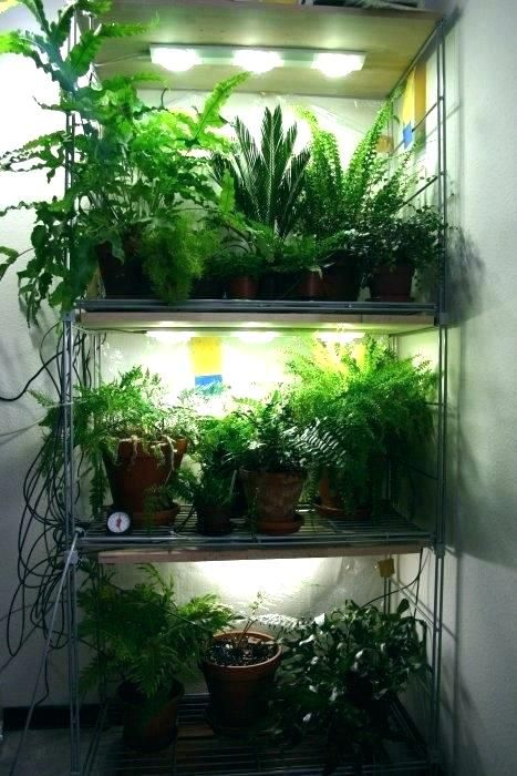Growing Lights For Indoor Plants Led Grow
