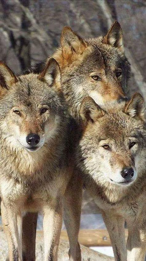 The pack!    TOGETHERNESS LIKE NO OTHER