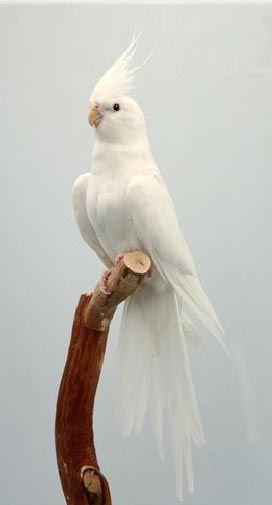 A Z Liste Von 125 Seltenen Albino Tieren Pics Beautiful