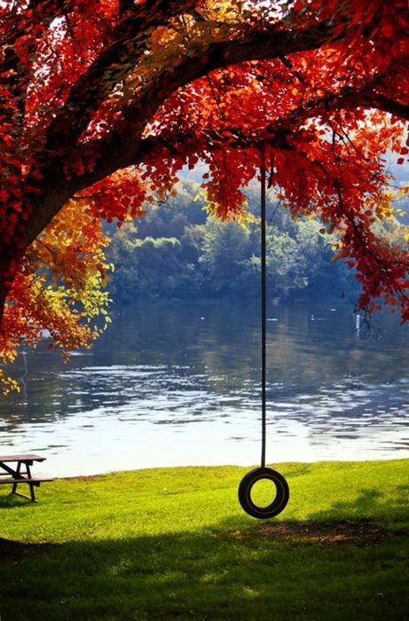 Tire swing on a lake.on a beautiful fall day. Beautiful World, Beautiful Places, Wonderful Places, Peaceful Places, Beautiful Dream, Simply Beautiful, Fall Picnic, Picnic Spot, Picnic Table