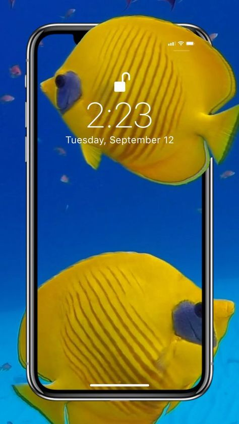 Colorful fishes live wallpaper for your iPhone XS from Everpix Live #livewallpapers #wallpaper #underwater #colourfulfish