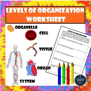 Levels Of Organization Worksheet Cells Tissues Organs And Systems Teks 6 12f Organ System Activities Organ System Cells And Tissues