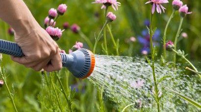 Les 8 Erreurs A Eviter En Arrosant Les Plantes Du Jardin Plante