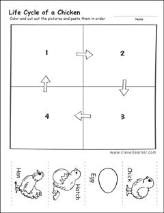 Chicken Life Cycle Activity Sheets For Kindergarten Chicken Life Cycle Activities Chicken Life Cycle Life Cycles Activities Chicken worksheets kindergarten