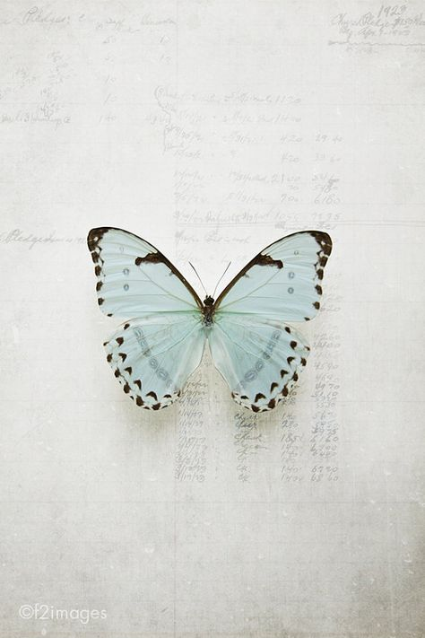 8x12 Morpho by f2images on Etsy