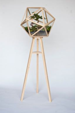 . Fort Standard's Terra terrarium ($6,550) is a free-standing icosahedron for 360-degree viewing of the 20-year-old bonsai inside.