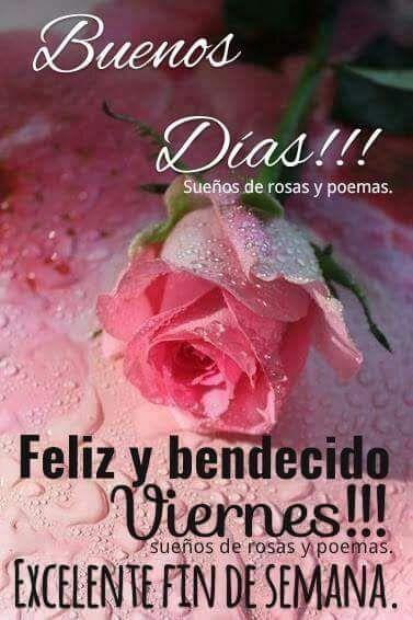 Buenos Dias Feliz Viernes Bonitas Flores Rosas Alegria Bendecido