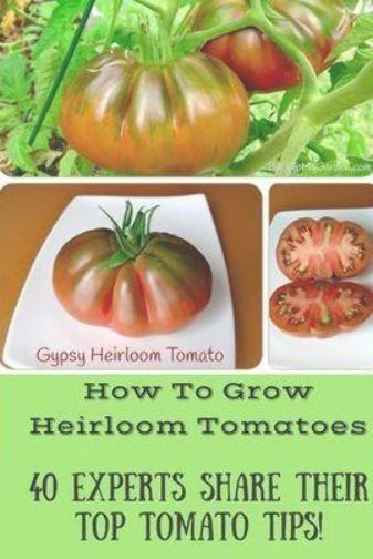 6a428662b4ce4d9b6b242bf1de040295 - Expert Gardener Organics Vegetable & Tomato Food