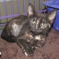 Available Pets At Zeus Rescues In New Orleans Louisiana Pets Animal Education New Orleans