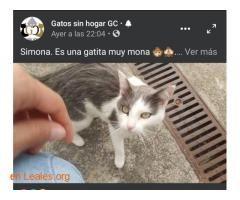 Gatas En Adopcion Espana Las Palmas Gran Canaria Gata