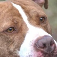 Animal Control Center Task Force Implement No Kill Equation At Stamford Ct Animal Shelter