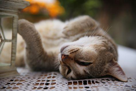 Timon in de relax mode.