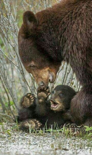 Giggles with Mom! Rare animal because of its cuteness. There are many species of animals in the world, maybe you have never seen these animals before. See if curious.  #animals #rare #cute #cuteanimal #rareanimal
