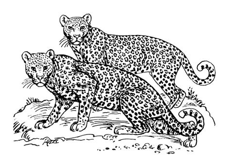 Ausmalbild Leopard Ausmalbilder Für Kinder Malvorlage