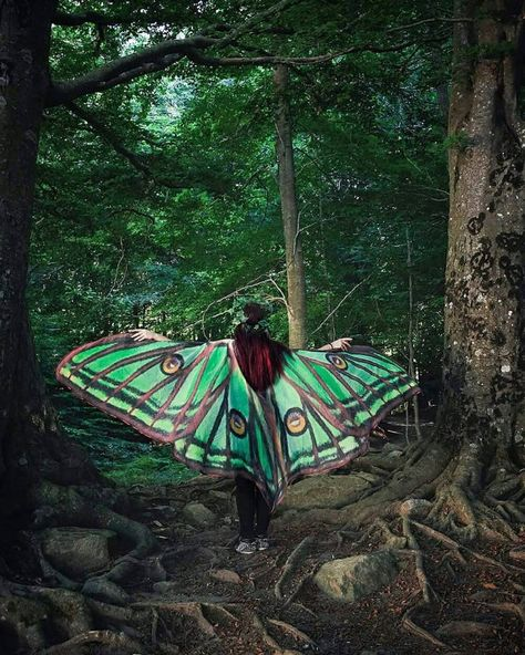 Luna Moth Cape Dance Wings Costume Adult Spanish Luna Moth Cape Chiffon Belly Halloween Burning Man Wings Costume Dance Costumes Moth Wings
