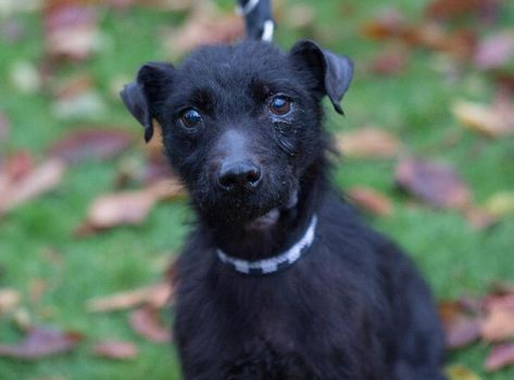 Suzie Find A Pet Rspca Org Uk With Images Rehome Dog Patterdale Terrier Happy Dogs