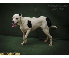 Perros En Adopción España Santa Cruz De Tenerife Tenerife Animals Dogs Instagram
