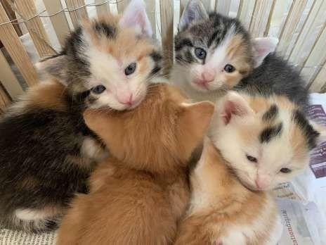 Kitten Zu Vergeben Hauskatze Bauernhofkatze Hauskatze Katzen