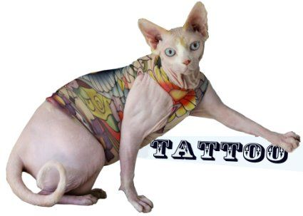 Tattcat in Luckys Birds Sphynx Cat Shirt with Tattoo