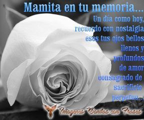 Versos Para Mi Madre Fallecida Con Una Rosa Blanca