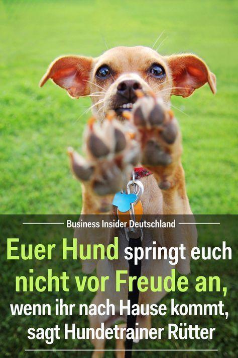 Euer Hund Springt Euch Nicht Vor Freude An Wenn Ihr Nach Hause Kommt Sagt Hundetrainer Rutter Sybille Sommer Hunde Hunde Erziehen Und Hundetrainer