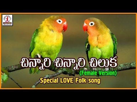 Chinnari Chinnari Chiluka Telugu Song Popular Private Love Songs Lalitha Audios And Videos Youtube Love Songs Playlist Love Songs Latest Dj Songs
