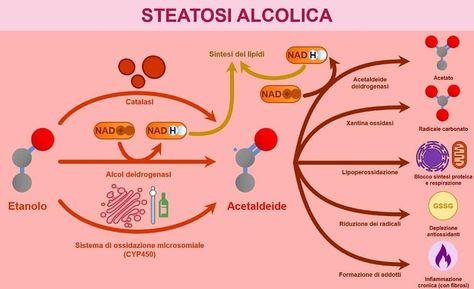 Si aggiunge al format #agoràframe uno schema realizzato da @gaetanopezzicoli sulla steatosi alcolica.  Sorge una domanda spontanea: come fa l'etanolo a provocare la steatosi? Per scoprirlo vi rimando al video sugli accumuli lipidici, il link lo trovate in bio😉. ~HandGunJ  #agorà #science #medicine #pathology
