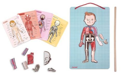 Körperteile kennenlernen