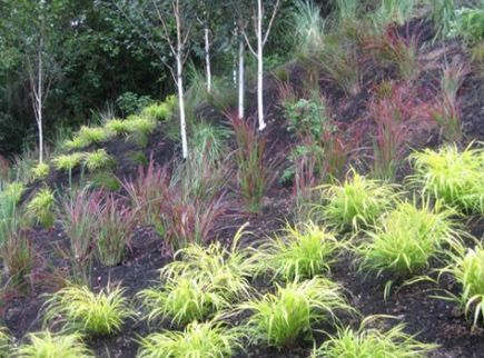 62 Ideas Landscaping On A Hill Sloped Yard Ornamental Grasses Landscaping On A Hill Steep Hill Landscaping Landscaping With Rocks
