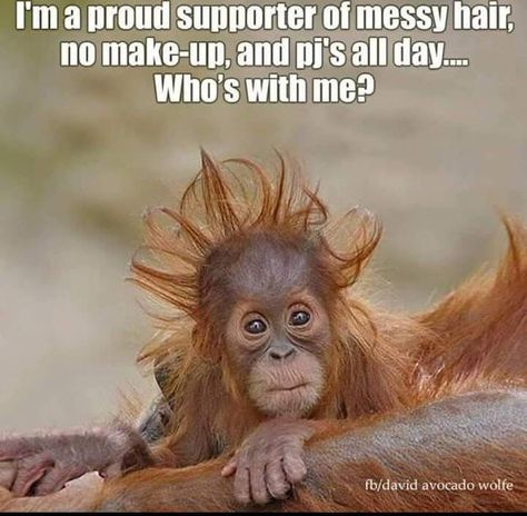 Humor Discover Funny Monkeys Funny Monkeys Meme The Post Appeared First On Gag Morning Quotes Funny Funny Good Morning Memes Funny Good Morning Quotes