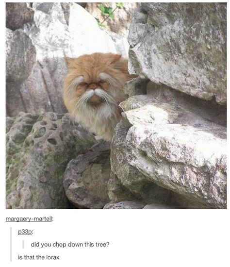 Holy shit it's the lorax! Funny Animal Memes, Cute Funny Animals, Cute Baby Animals, Cat Memes, Cute Cats, Funny Shit, Stupid Funny Memes, Haha Funny, Funny Cute